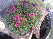 Eigentumswohnung mit Garten in Lochau