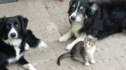 Katzenbaby vom Bauernhof