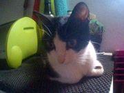 DRINGEND - Pflegestellen Katzen