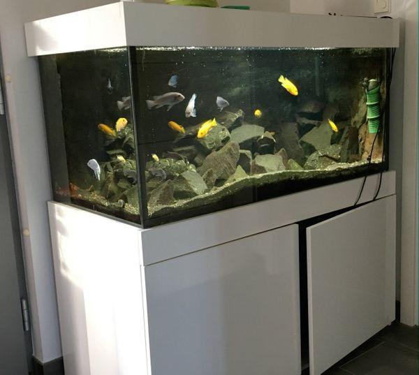 430 Liter Giesemann Contura Aquarium Weis Hochglanz 120 cm Lang - Backnang - Aquaristik: Aquarium. Verkaufe ein Giesemann Contura 430 Weis Hochglanz Aquarium mit Abdekung und Beleuchtung und Unterschran. 3-D Motiv rückwand, Kies und Deko Steine sind auch mit dabei.Er ist ca 7 Jahre alt und Neupreis war damals 1499 Euro - Backnang