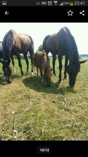 Suche dringend Bauernhof Pferdestall Scheune