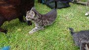 Süße Kätzchen / Babykatzen