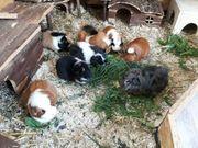 Kleintierbetreuung liebevoll mit Erfahrung Kaninchen