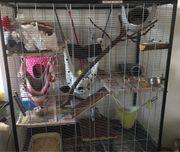 Ratten inklusive Käfig und Zubehör