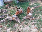 Baumwurzeln und Wurzelteile als Dekostücke