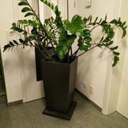Übertopf groß schwarz inkl Grünpflanze
