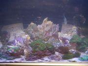 Lebengestein Korallen