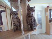 Drei liebenswerte Katzenbabys