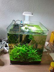 Süßwasser Nano komplett Aquarium 30 -