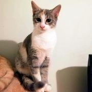Kätzchen Emmy wartet auf ihre