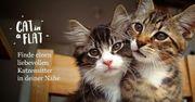 catinaflat Urlaubsbetreuung Katzen