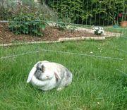 Nhd Kaninchen sucht