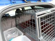 Hundeboxe aus Stahl für Einzelhund