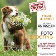 Hundeshooting, Hundedefotografie, Tierfotograf ,
