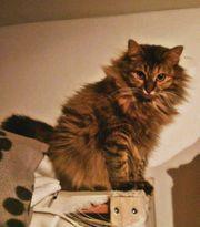 Katze Lea sucht dringend ihr