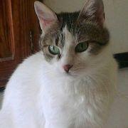 Katzenlady Princess wartet auf ihre