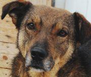 Tierschutz Saymon sucht verständnisvolle Mensch