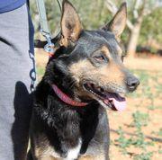 ERIZO - fröhlicher Hundejunge sucht Familienschluss