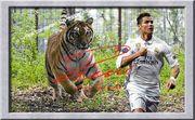 CRISTIANO RONALDO vom Tiger gejagt