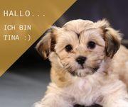Tina / Yo-Chon /