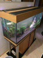 Aquarium 240l 120x40x50