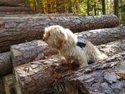 Hunde Sitter/in -