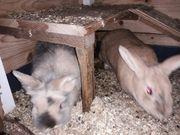 2 Hasen und Käfig für