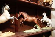 Porzellan Pferde The great Horses